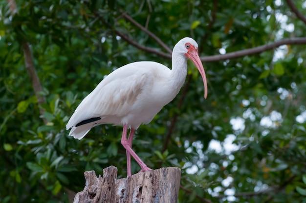 Floryda ptak na drewnie