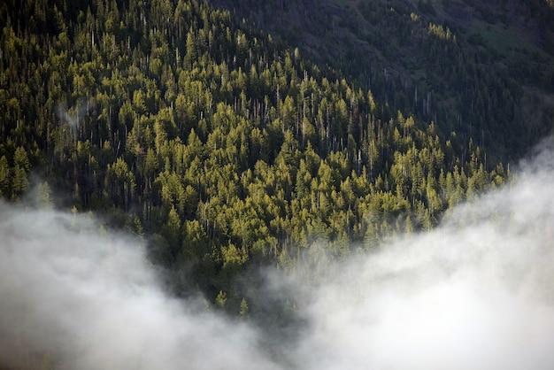 Foggy washington hills