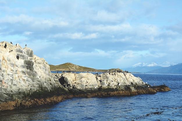 Foki i lwy morskie w kanale beagle.