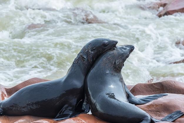 Foki kolonia przy przylądka krzyżem na atlantyckim wybrzeżu namibia, afryka. widok na linię brzegową i wzburzony falujący ocean.