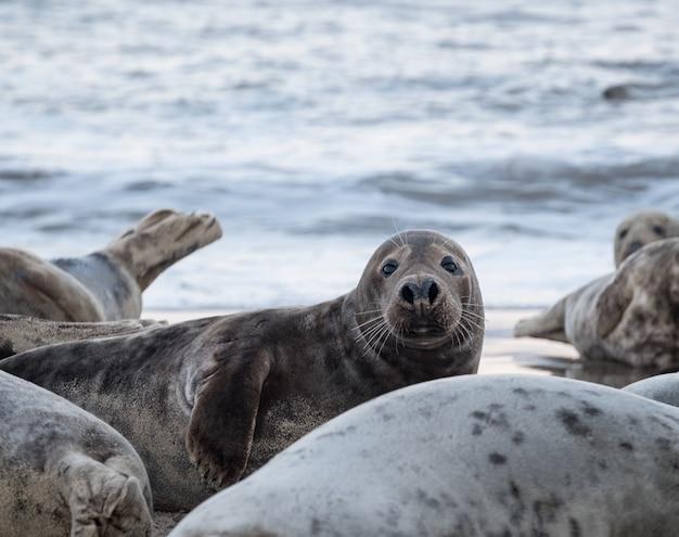 Foki Leżące Na Plaży W Ciągu Dnia Darmowe Zdjęcia