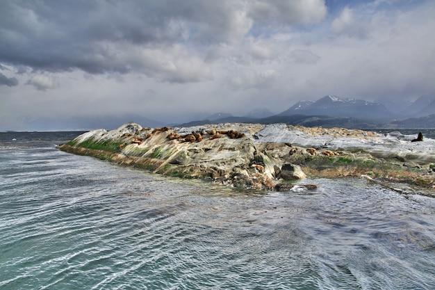 Foki na wyspie w kanale beagle w pobliżu miasta ushuaia, ziemia ognista w argentynie