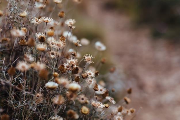 Fondo de plantas y flores del bosque.