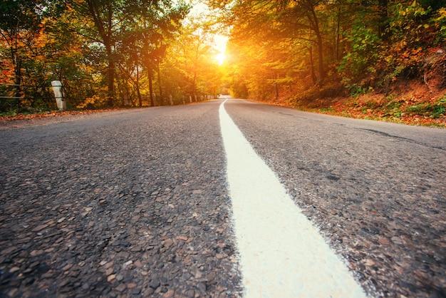 Forest road jesienią. krajobraz. ukraina