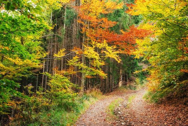 Forest road jesienią. krajobraz