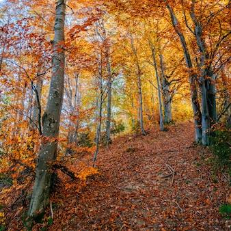 Forest road jesienią.