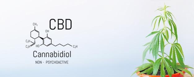 Formuła konopi cbd, model strukturalny cząsteczki kanabidiolu