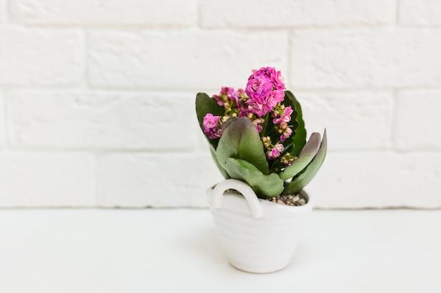 Formy ceramiczne z roślinami. różne rośliny sukulenty, kaktusy, rośliny ozdobne do domu