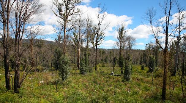 Forrest jesienią