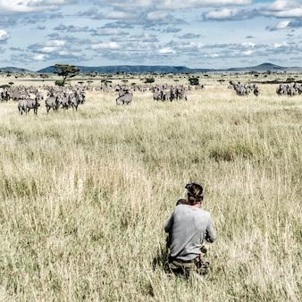 Fotograf i grupa zebr w parku narodowym serengeti