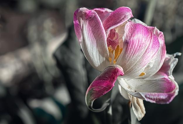Fotografia makro białego kwiatu