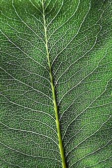 Fotografia makro ciemnozielone naturalne tło z liściem z wzorem żył. układ liści. mieszkanie