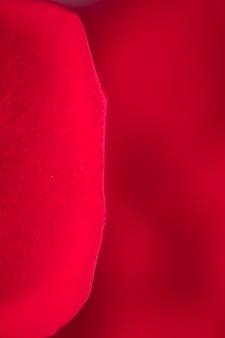 Fotografia makro czerwonych płatków róży