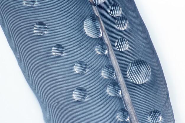 Fotografia makro kropli wody na ptasie pióro