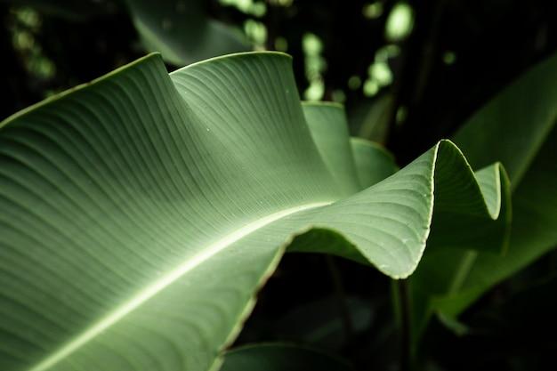 Fotografia makro liści tropikalnych
