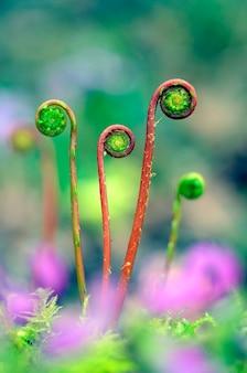 Fotografia makro młodych liści paproci