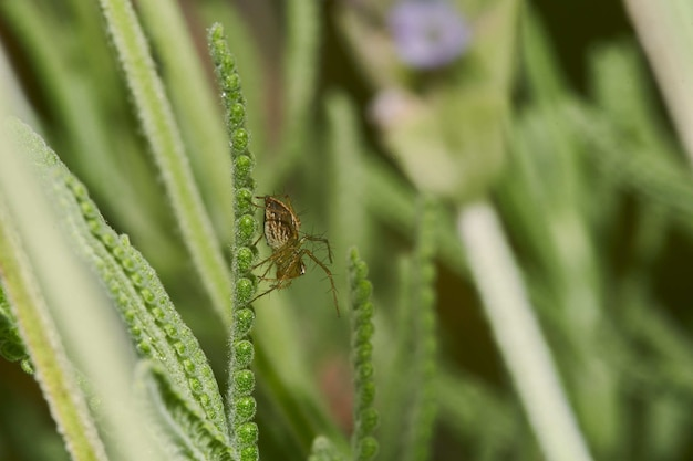 Fotografia makro pająka na kwitnącej roślinie