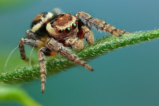 Fotografia makro pająka
