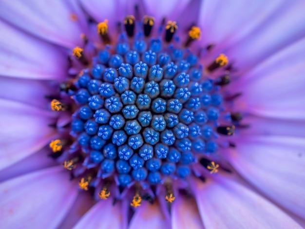 Fotografia makro piękny fioletowy kwiat głowy