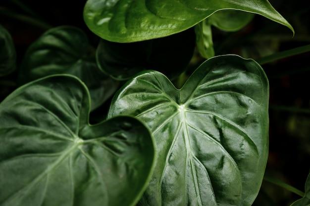 Fotografia makro pięknych zielonych liści