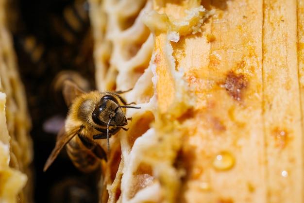 Fotografia makro pracujących pszczół na plastrach miodu. obraz pszczelarstwa i produkcji miodu