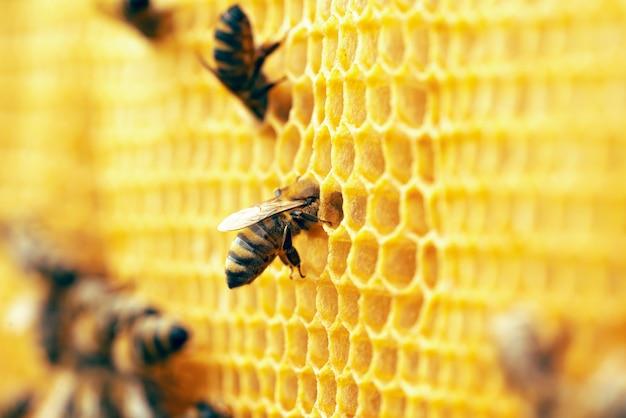 Fotografia makro pracujących pszczół na plastrach miodu.