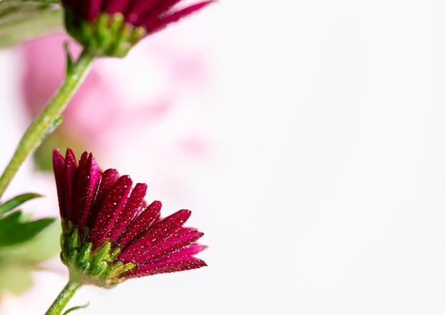 Fotografia makro róż i kwiatów amarantowych oraz płatków objętych kroplami wody.