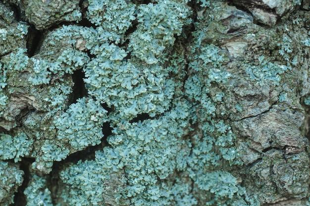 Fotografia makro wzór pleśni grzybów drzewa