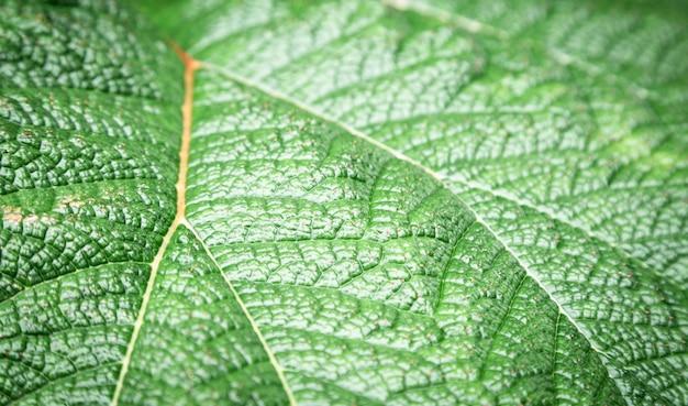Fotografia makro z zielonych liści