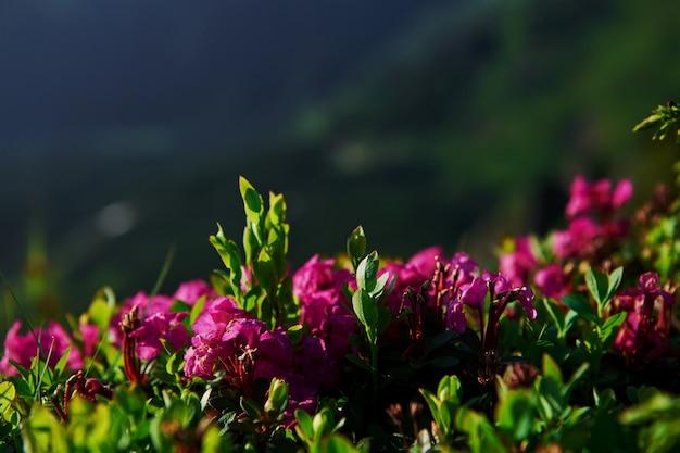 Fotografia makro. zamknij widok trawy w górach w słoneczny dzień.