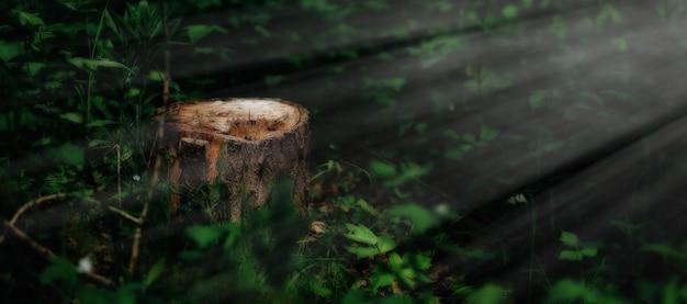 Fotografia malowniczy kikut w świetle słonecznym w zielonym lesie, wiosna czas. piękna przyroda rano we mgle. magiczny bajkowy las z tajemniczymi światłami. wylesianie