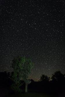 Fotografia nocna w naturalnym obszarze aceituna. extremadura. hiszpania.