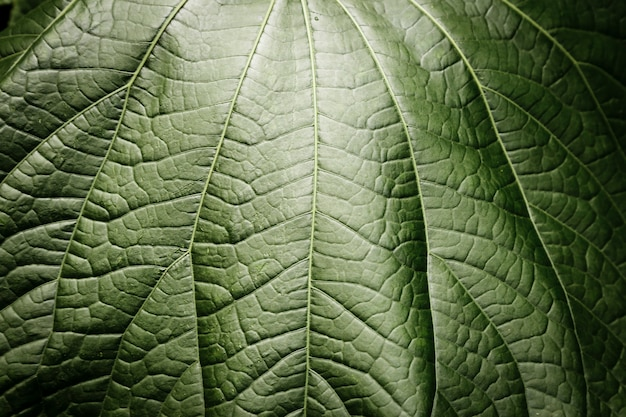 Fotografia piękny zielony liść makro