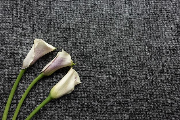 Fotografowanie obiektu bukiet kwiatów na czarnym tle w ramce.