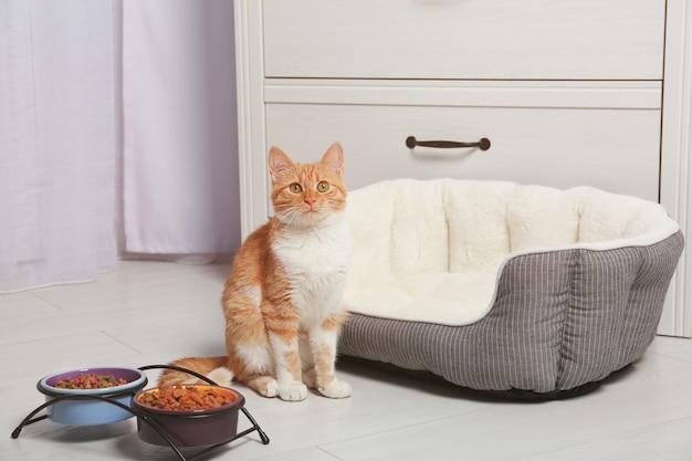 Foxy kot w pobliżu misek z jedzeniem w domu