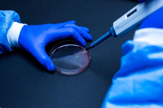 Fragment pipety, która upuszcza kroplę płynu na szalkę petriego w laboratorium z niebieskim otoczeniem