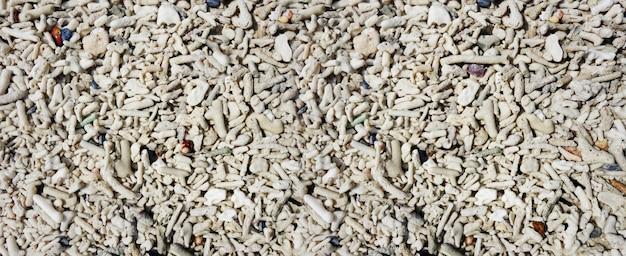 Fragmenty koralowca