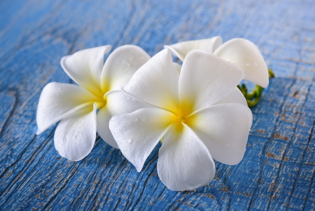 Frangipani kwiat na stole