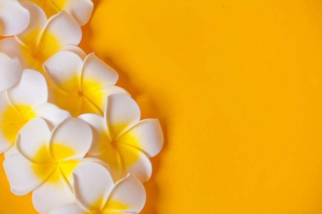 Frangipani plumeria kwitnie na żółtej powierzchni. skopiuj miejsce widok z góry. kompozycja tropikalna.