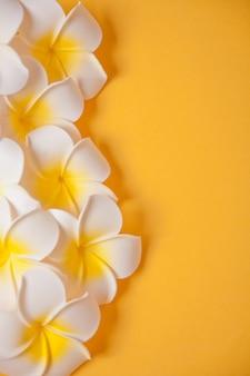 Frangipani plumeria kwitnie na żółtym tle. skopiuj miejsce widok z góry. kompozycja tropikalna.