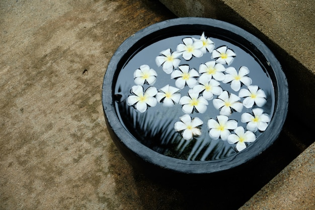 Frangipani white tropical flower in water bowl