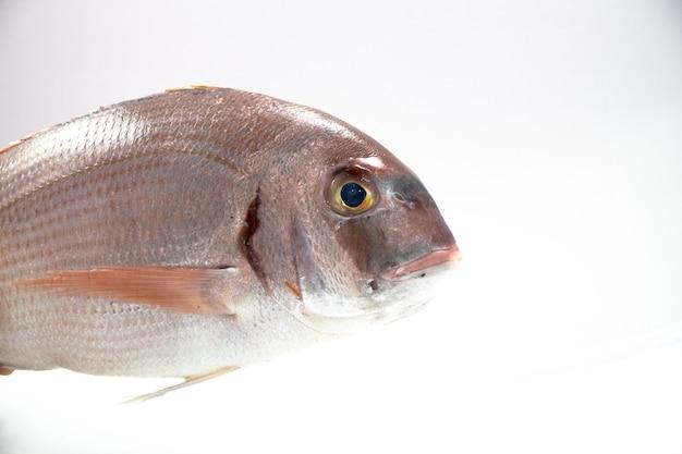 Fresk pescado