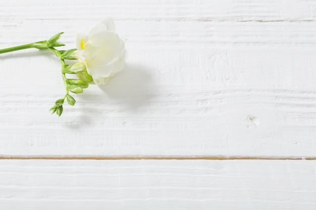 Frezja kwitnie na białym drewnianym stole
