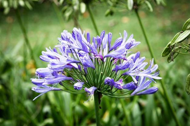 Frontowego widoku błękitny tropikalny kwiat z zamazanym tłem