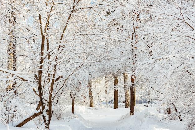 Frossty zimowy krajobraz. drzewa w śniegu w parku