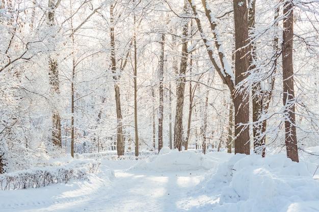 Frossty zimowy krajobraz. drzewa w śniegu