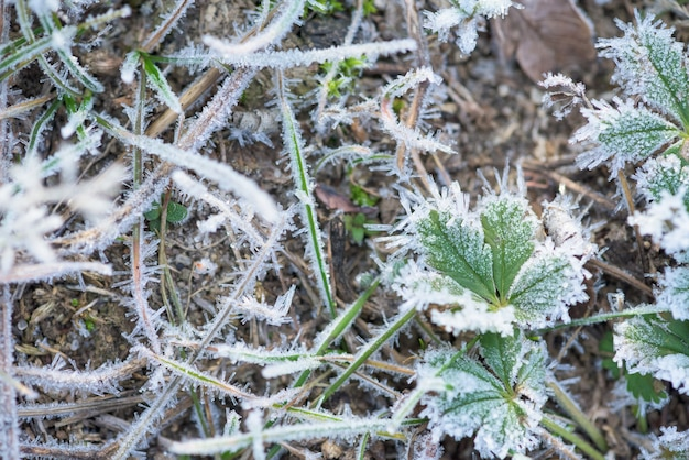 Frost frost z kryształków lodu na trawie zielony zimowy poranek.