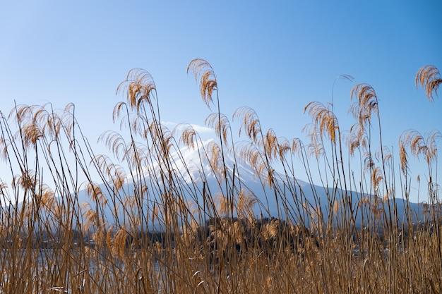 Fuji góra i kawaguchiko jezioro z chmurą i niebieskie niebo dniem