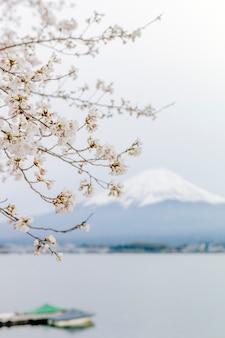 Fuji góra i sakura w jeziorze kawaguchiko