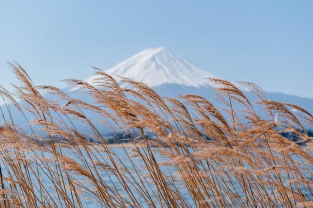 Fuji mount z widokiem na kwiat